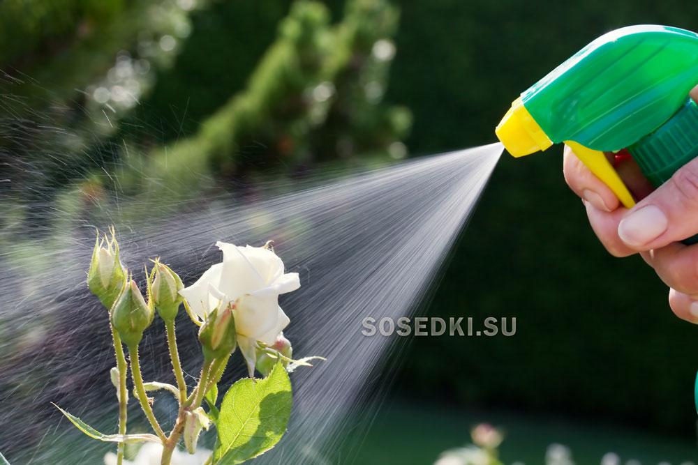 Как опрыскивать розы медным купоросом