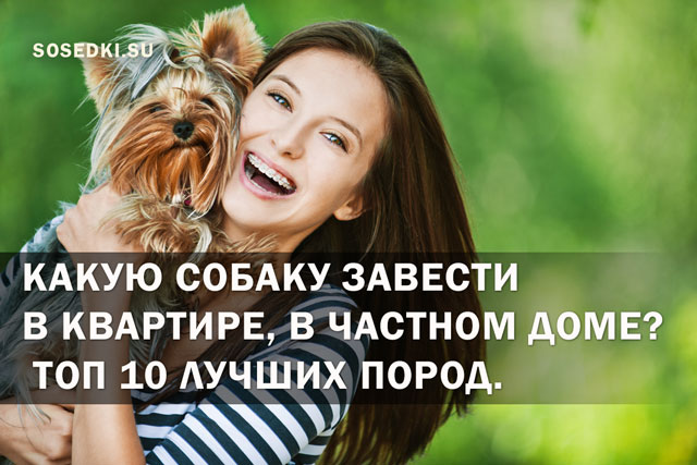Какую собаку завести в квартире, в частном доме? ТОП 10 лучших пород с фото, названием и описанием